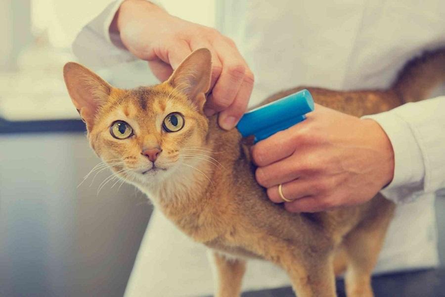 معاینه گربه توسط پزشک